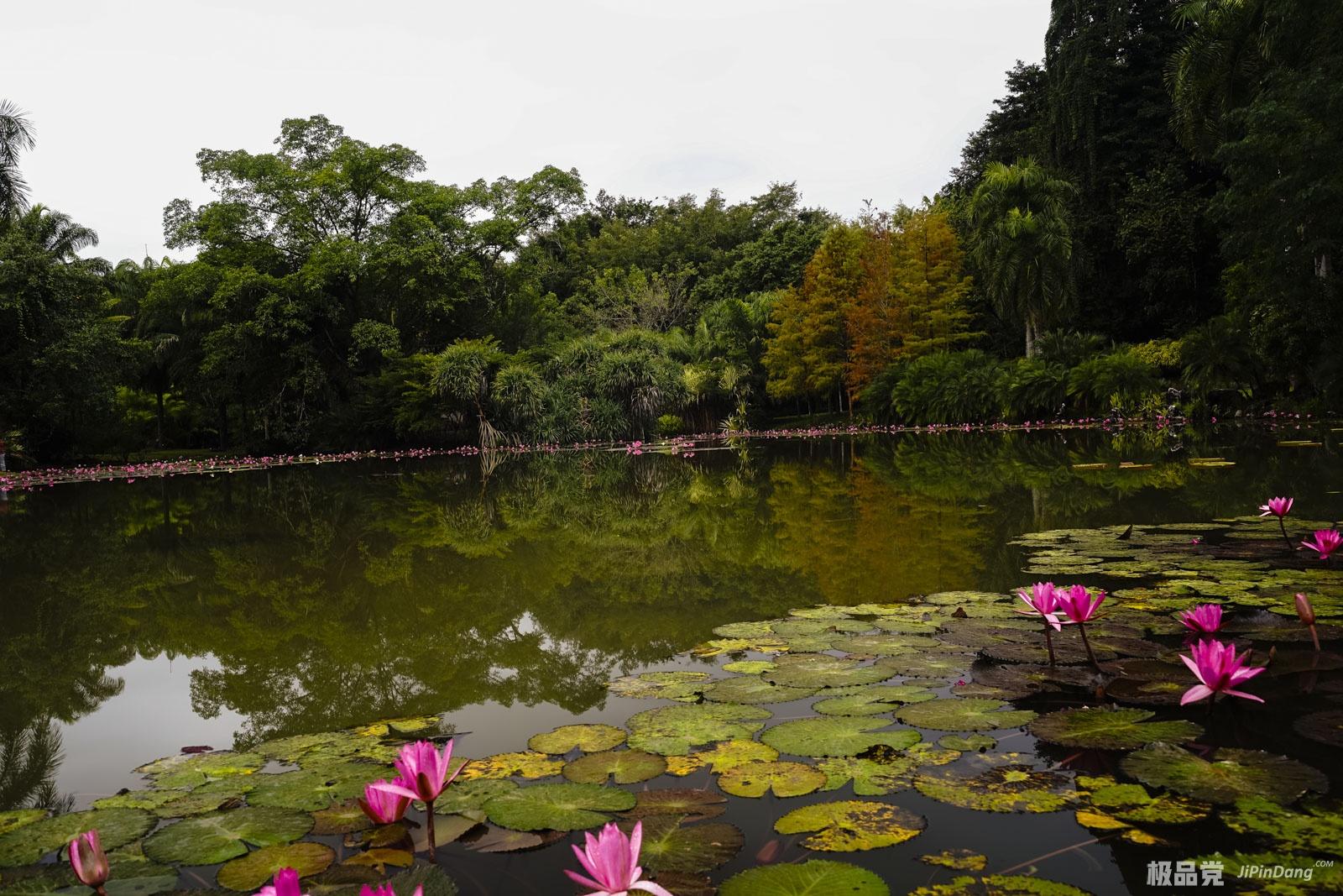 20180102回忆—云南西双版纳植物园、千寻美食音乐会馆-极品党